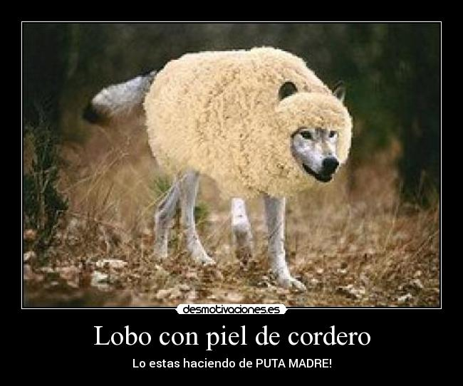 lobo, cordero, falsas apariencias
