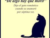 gato romántico