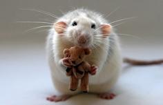 ratón pérez dientes